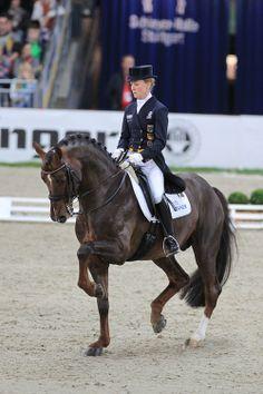 Damon Hill NRW「Donnerhall x Romanze」 Westphalian Stallion