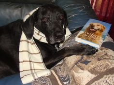 Bandit from page 130 knows a good book when he sees it!