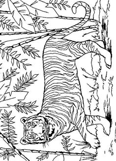Lions and Tigers - 999 Coloring Pages