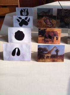 Animal foot prints