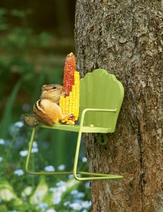 A-maize-ing Feeder