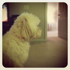 bella pup!