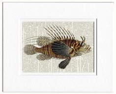 lionfish dictionary page print by FauxKiss on Etsy