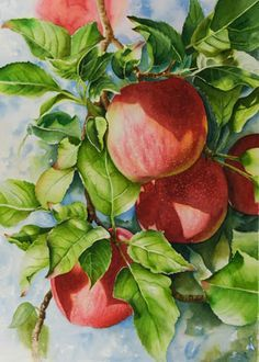 Watercolor painting demonstration of red apples