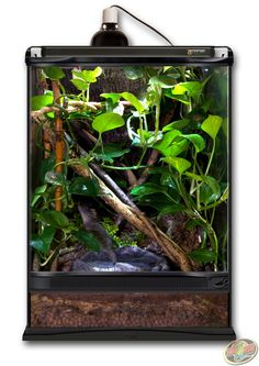 Zoo Med Terrarium designed as a forest habitat. DIY this terrarium with Hydroballs, Eco Earth, Forest Floor, Sand Blasted Grapevine, and live plants of your choosing. Crested Gecko Vivarium, Crested Gecko Habitat, Lizard Habitat, Gecko Cage, Lizard Cage, Snake Cages, Chameleon Terrarium, Gecko Terrarium, Terrarium Ideas
