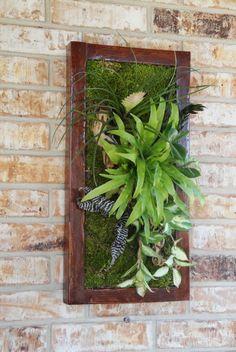 Vertical Garden with succulents, birdnest fern and bromeliad
