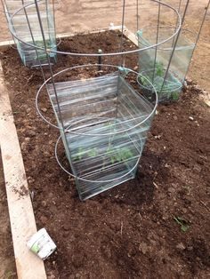 mini greenhouse for each plant in our raised bed garden