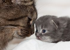 """This 17-day-old kitten! 