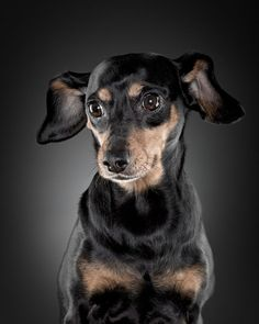 70 lovely and wonderful pet photographys