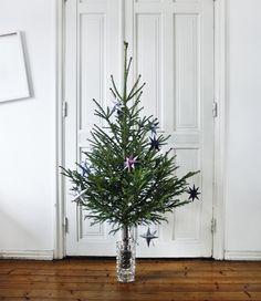 My little Christmas tree