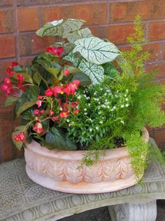 Summer Shade Container Garden with recipe / Pike Nurseries Large Garden Pots, Garden Boxes, Garden Ideas, Container Flowers, Container Plants, Gemüseanbau In Kübeln, Shade Flowers, Container Gardening Vegetables, Plant Nursery