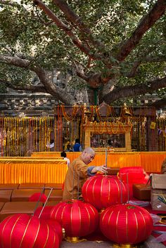 A Chinese Buddhist monk is preparing a ceremony by the Bodhi tree inside the Mahabodhi Mahavihara temple of Bodh Gaya in Bihar, India.  by Marji Lang