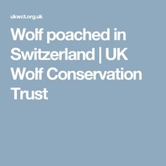 Wolf poached in Switzerland | UK Wolf Conservation Trust