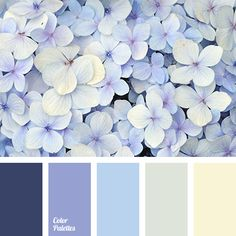 color of hydrangea, color solution, dark-violet, gentle shades, gentle violet, gray, gray-yellow, light blue, pale yellow, pastel tones, selection of color for house, selection of color for interior, Violet Color Palettes, Yellow Color Palettes.