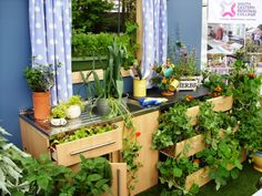 Upcycled kitchen garden