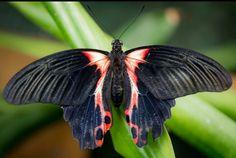 Tropische vlinder