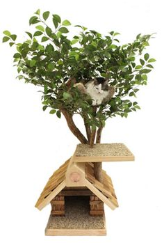 Love these cat tree trees!