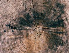 22 отметок «Нравится», 1 комментариев — Wood Geek (@woodgeek.ru) в Instagram: «Как же много информации дает спил дерева.. #wood #дерево #деревообработка #woodwork #woodworking»