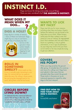 What Does It Mean When My Dog... Infographic