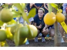 Check out the OC Register's article on donated orange trees planted at UC Irvine athletic fields.