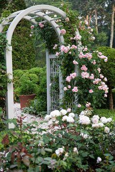 Nice flowers in the garden