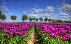 HD lente wallpapers | Achtergrond Wallpapers