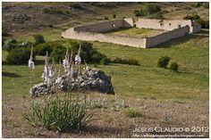 El Blog de Jesus Claudio: Gamonitos, varita de San José, gamones (Asphodelus albus), otra planta herbácea vivaz de la pradera de alta montaña. Huéscar.