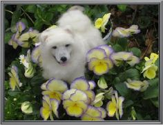 Miniature Needle Felted Dog / Custom Portrait by GourmetFelted