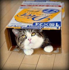 Những chú mèo cute nổi tiếng Internet 1