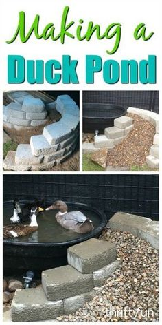 This is a guide about making a duck pond Raising backyard fowl is be ing quite popular If you choose to have ducks they will need a some type of pond - 29 Inspirational Diy Duck Pond Inspiration Backyard Ducks, Backyard Farming, Ponds Backyard, Chickens Backyard, Backyard Retreat, Portable Chicken Coop, Backyard Chicken Coops, Duck Enclosure, Duck House Plans