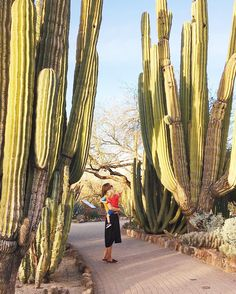 The ultimate Arizona bucket list to inspire you to visit all parts of the Grand Canyon state. There are so many hidden gems to discover with this list of 101 fun things to do in Arizona. Arizona Road Trip, Arizona Travel, Sedona Arizona, Phoenix Arizona, Scottsdale Arizona, The Wave Arizona, Globe Arizona, Oh The Places You'll Go, Places To Travel