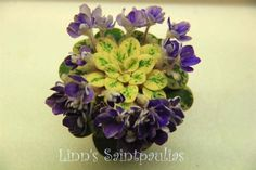 Petite Jewel 2, African Violet, Saintpaulia, Grown by Boa Linn, photo taken by Boa Linn.