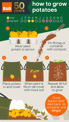 Whether you like them mashed, roasted or fried, check out our super easy spud growing guide to find out how you can cultivate these versatile veggies, in your very own outdoor space. Growing Veggies, Growing Plants, Potato Growing Containers, Succulent Containers, Container Gardening Vegetables, Growing Tomatoes, Container Flowers, Container Plants, Veg Patch