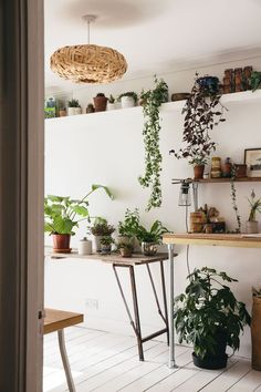 A bright plant filled workspace