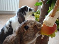 Treats for buns