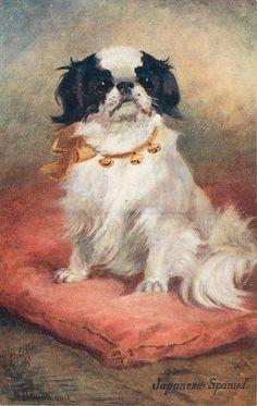 Divided Back Postcard Japanese Spaniel Dogs Collars, Japanese Chin, Lhasa Apso, Pekingese, Vintage Dog, Animal Paintings, Beautiful Dogs, Dog Art, Pet Dogs