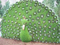 Topiary Art Topiary Garden, Garden Art, Garden Design, Most Beautiful Gardens, Beautiful Flowers Garden, Plant Art, Hedges, Botanical Gardens, Garden Landscaping