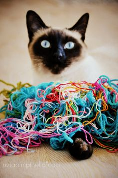 My cat loves yarn. And I love my cat. There´s always time for a little play and always some yarn for him <3<3<3