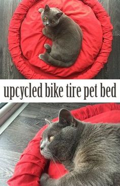 Turn an old bike tire into a stylish pet bed!