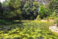 Lake - Serralves Park by sarasantosrodrigues #ErnstStrasser #Portugal Portugal, Golf Courses, Park, Parks