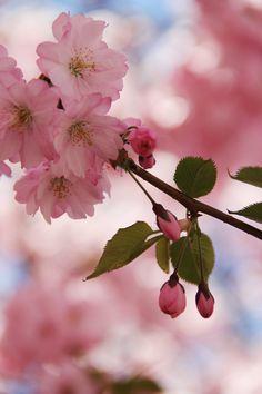 cherry bomb!!!..super pretty