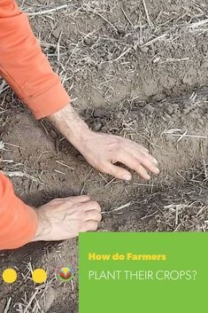 Sustainable farming: How do farmers plant their crops? Oats Recipes, No Dairy Recipes, Fruit Recipes, Egg Recipes, Pork Recipes, Chicken Recipes, Vegetarian Recipes, Mushroom Recipes