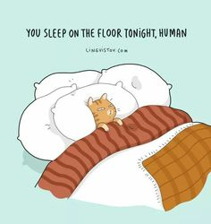 New funny cartoons drawings jokes humor 38 ideas I Love Cats, Cute Cats, Funny Cats, Crazy Cat Lady, Crazy Cats, Kitten Baby, Catsu The Cat, Motivation Poster, Cat Whisperer