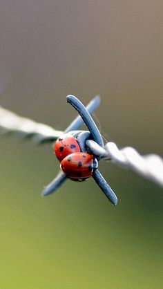 Lady bug on metal wire