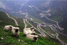Stelvio Pass - Italy... if you dare!?
