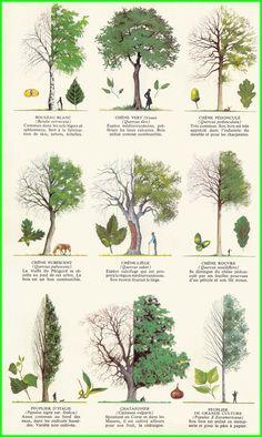 Les arbres 3 ad.gif (964×1613)