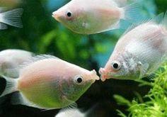 Como montar um aquário_11