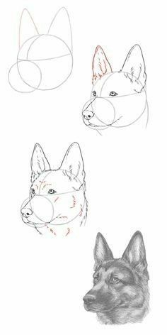 Learn To Draw Animals - Animal drawings sketches, Pencil drawing tutorials, Dog drawing tutorial, Pencil drawings, Drawings - Pencil Art Drawings, Art Drawings Sketches, Easy Drawings, Drawings Of Dogs, Drawings Of Animals, Colorful Drawings, How To Draw Sketches, Dog Pencil Drawing, Realistic Animal Drawings