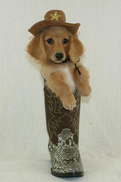 Just doing a little boot scootin' boogie  www.frostdox.com