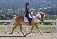 DRESSAGE_HAFLINGER-12 - Haflinger Dressage 12